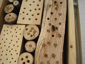 Insektenhotel Füllmaterial und gehörnte Mauerbiene